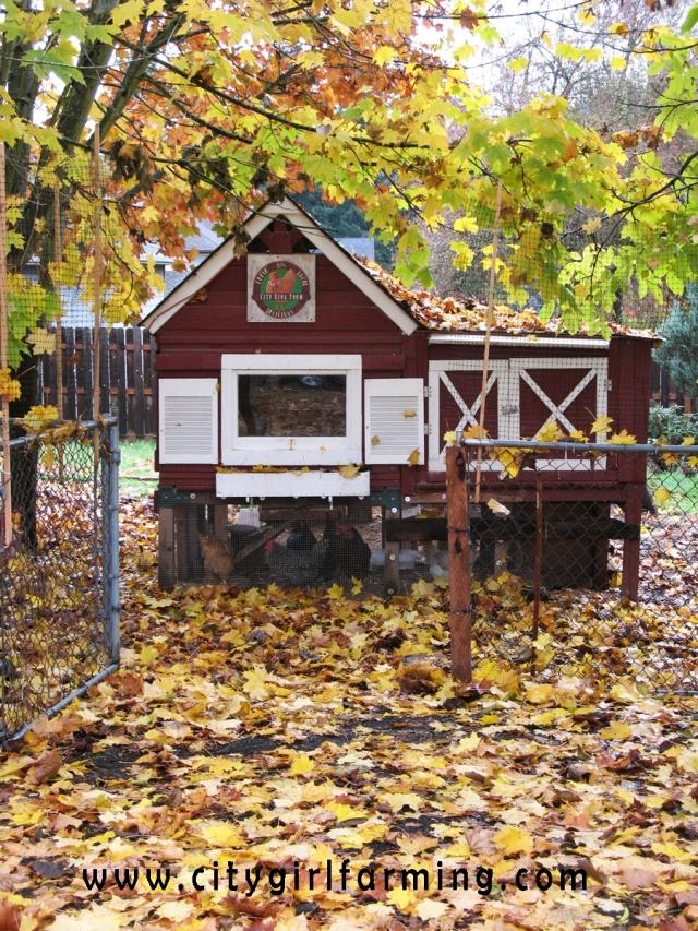 fall-coop
