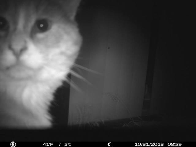 Everyone is into selfies these days...cats can potentially cause threat to a flock, but generally only to chicks. I've never had a problem with the many cats that come in and out of my backyard.