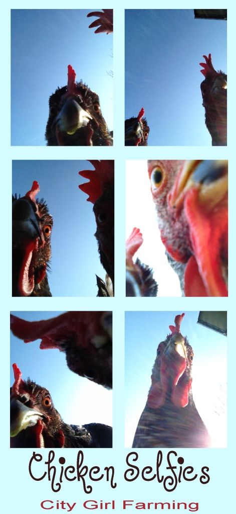 ChickenSelfies